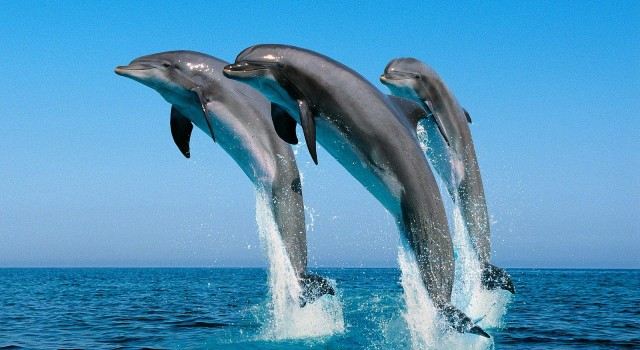 Dolphins – The Wild Side